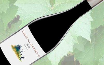 Exclusieve Spaanse rode wijn ingekocht